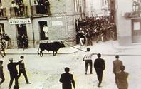 Toro enmaromado de Benavente (Zamora)