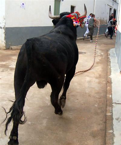 """El """"Torico"""" de Chiva en Gestalgar"""