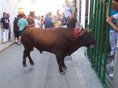 Toro de Juan José Laparte carrera especial del Torico 2008